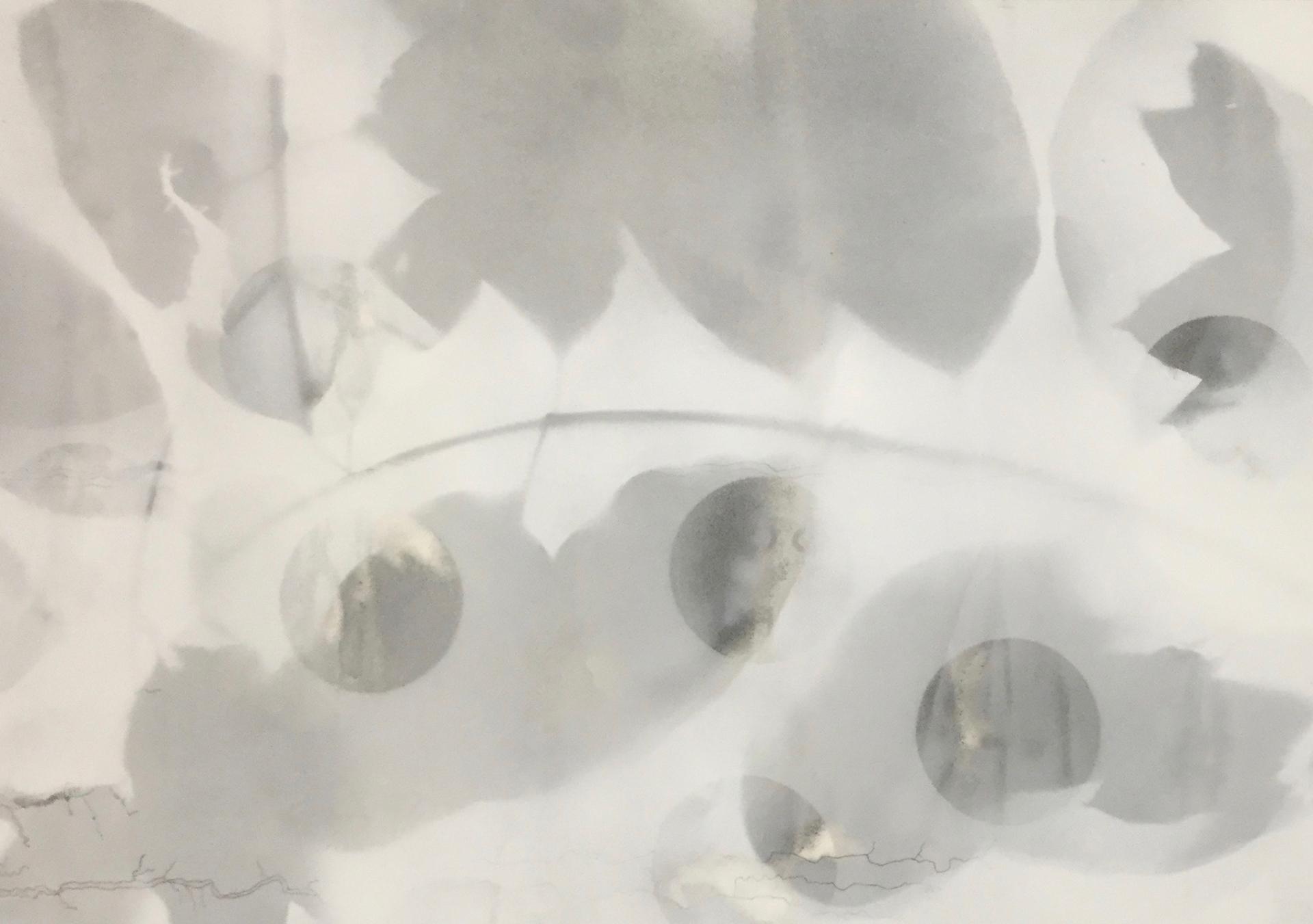 Emma Robertson - Deposition Lines
