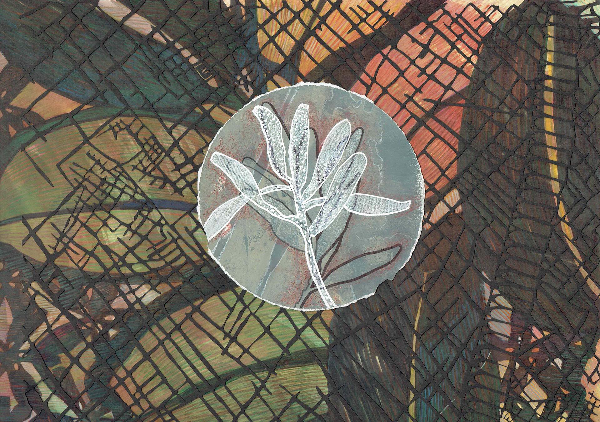 Emma Robertson - Micrographia 2